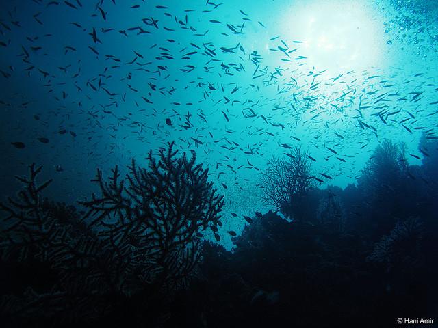 モルディブの海の底