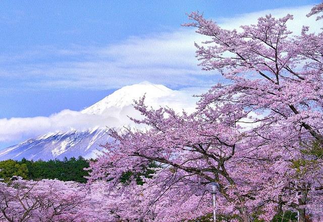 富士山 信仰の対象と芸術の源泉の画像 p1_12