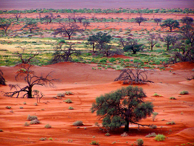 ナミブ砂漠の画像 p1_11