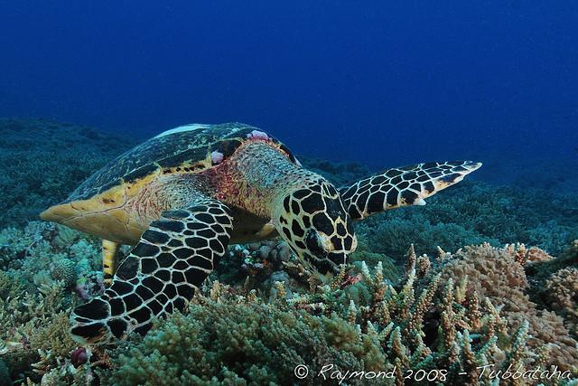 トゥバタハ岩礁海中公園の絶景画像