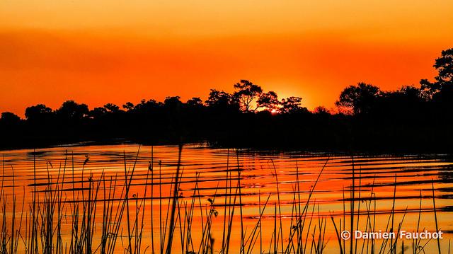 オカバンゴ・デルタの画像 p1_5
