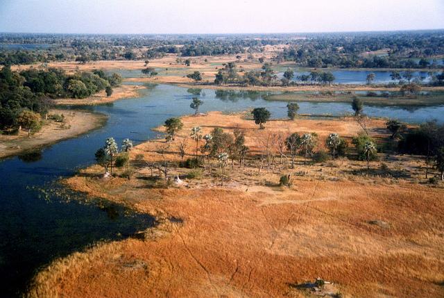 オカバンゴ・デルタの画像 p1_24