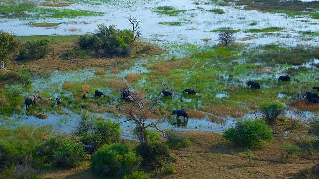 オカバンゴ・デルタの画像 p1_6