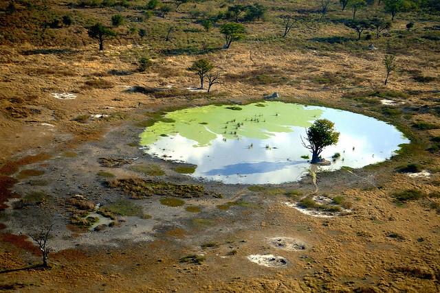 オカバンゴ・デルタの画像 p1_23