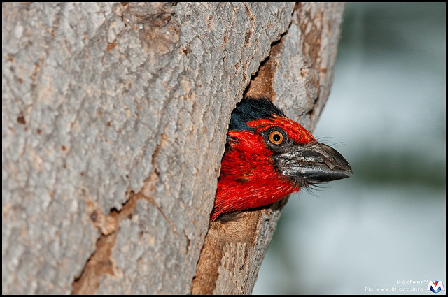 オカバンゴ・デルタの画像 p1_9