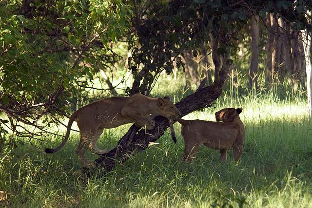 オカバンゴ・デルタの画像 p1_12