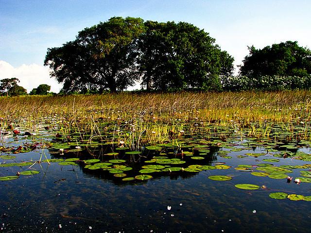 オカバンゴ・デルタの画像 p1_19