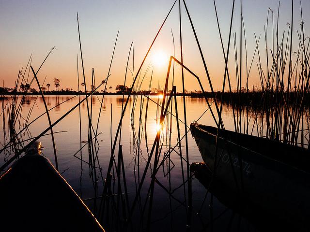 オカバンゴ・デルタの画像 p1_25