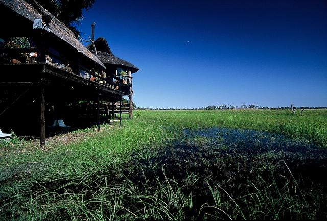 オカバンゴ・デルタの画像 p1_35