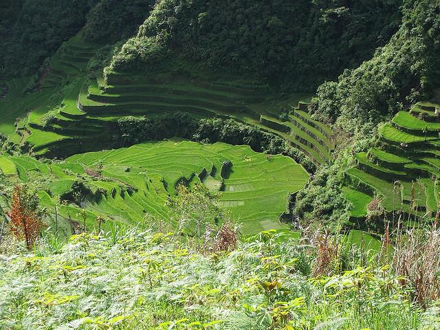 フィリピン・コルディリェーラの棚田群の画像 p1_9
