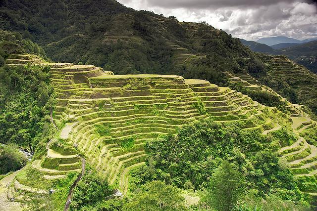 フィリピン・コルディリェーラの棚田群の画像 p1_21