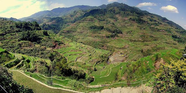 フィリピン・コルディリェーラの棚田群の画像 p1_11