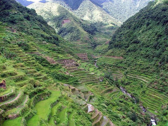 フィリピン・コルディリェーラの棚田群の画像 p1_25