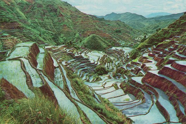 フィリピン・コルディリェーラの棚田群の画像 p1_13