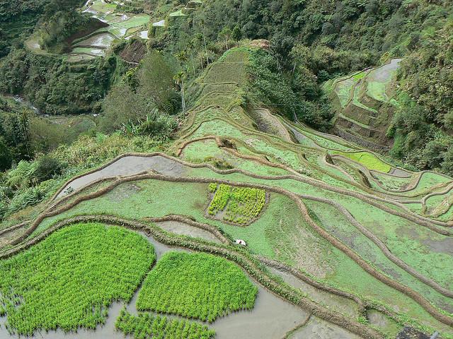 フィリピン・コルディリェーラの棚田群の画像 p1_32