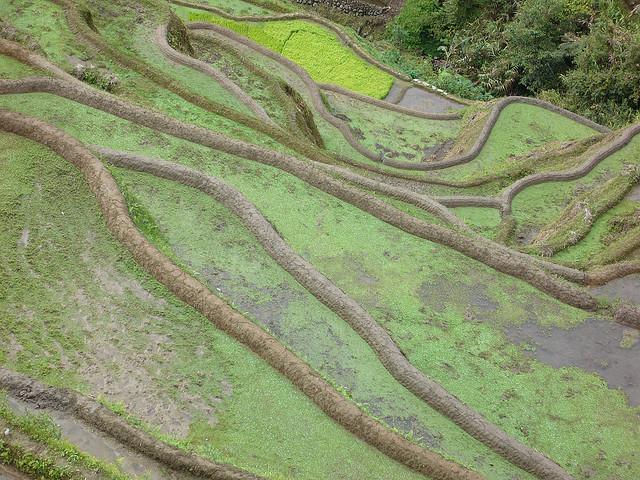 フィリピン・コルディリェーラの棚田群の画像 p1_6