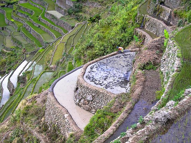 フィリピン・コルディリェーラの棚田群の画像 p1_36