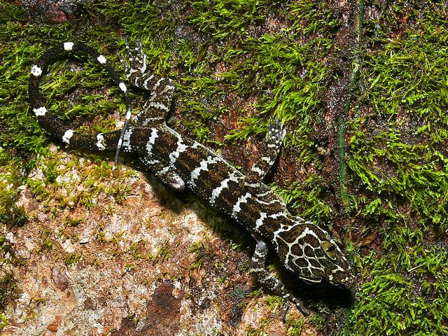 グヌン・ムル国立公園の画像 p1_7