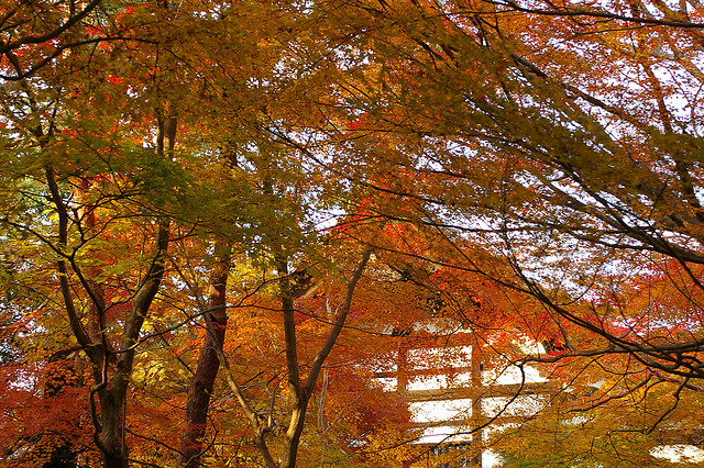古都京都の文化財の画像 p1_8