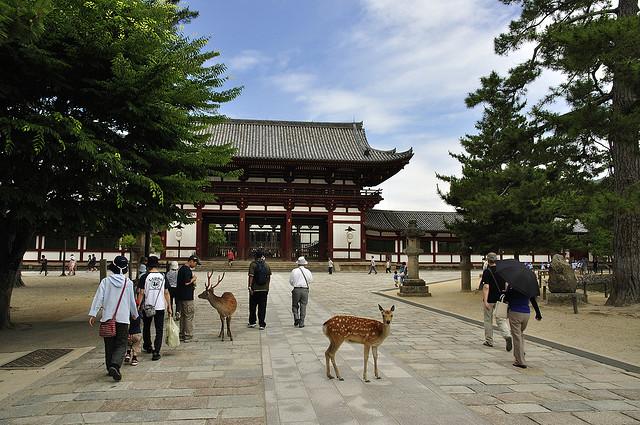 古都奈良の文化財の画像 p1_22