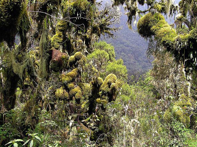 ルウェンゾリ山地国立公園の絶景...