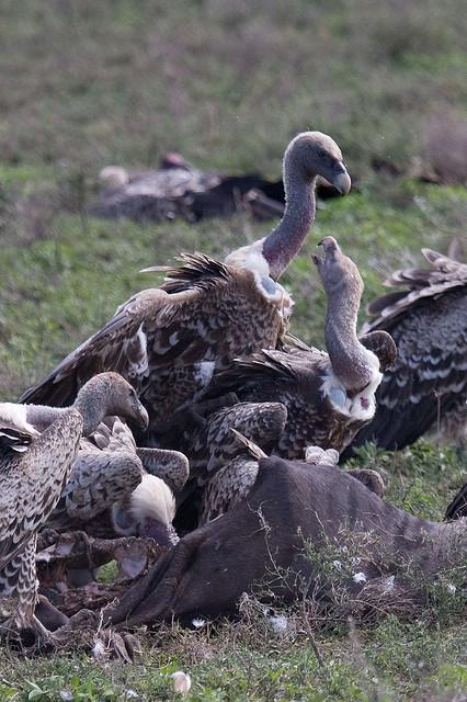 ンゴロンゴロ保全地域の画像 p1_10
