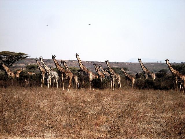 ンゴロンゴロ保全地域の画像 p1_8