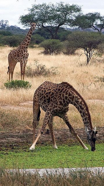ンゴロンゴロ保全地域の画像 p1_39