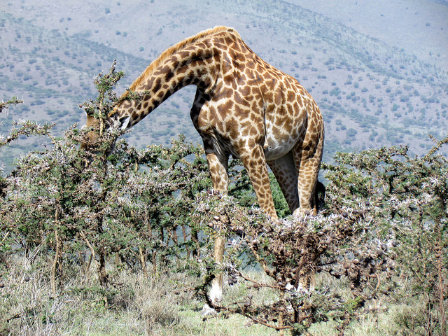 ンゴロンゴロ保全地域の画像 p1_3