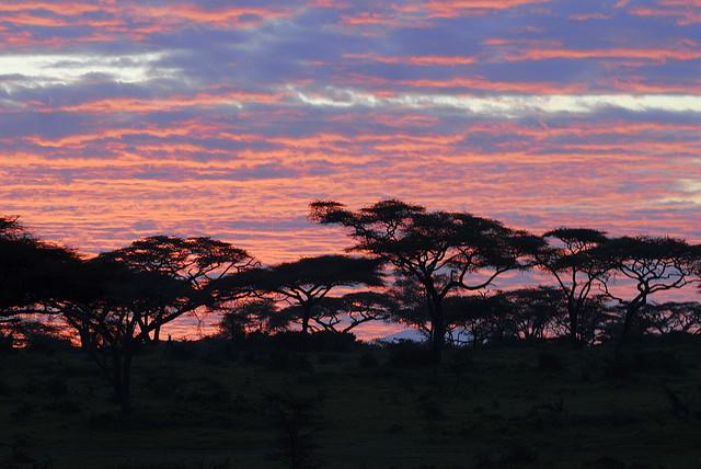 ンゴロンゴロ保全地域の画像 p1_40