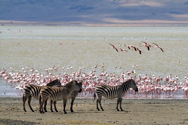 ンゴロンゴロ保全地域の画像 p1_16