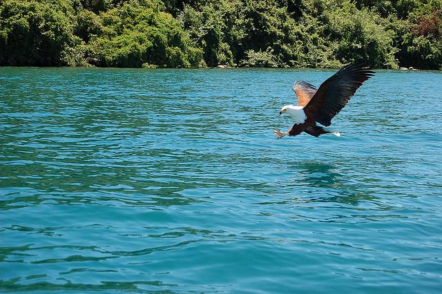 マラウイ湖国立公園の画像 p1_23