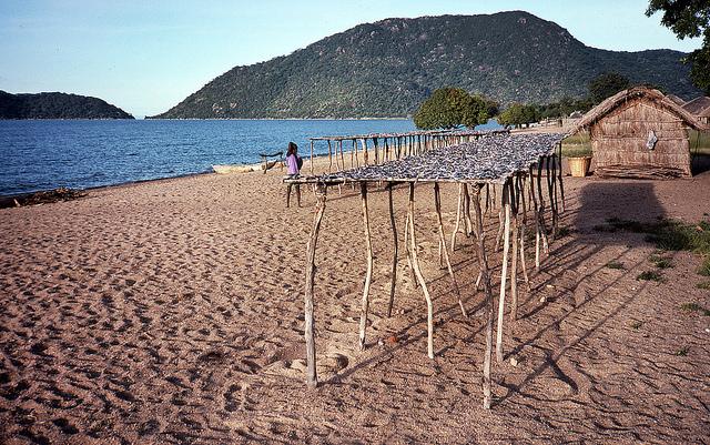 マラウイ湖国立公園の画像 p1_14