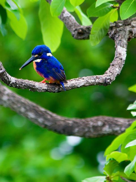 カカドゥ国立公園の画像 p1_32