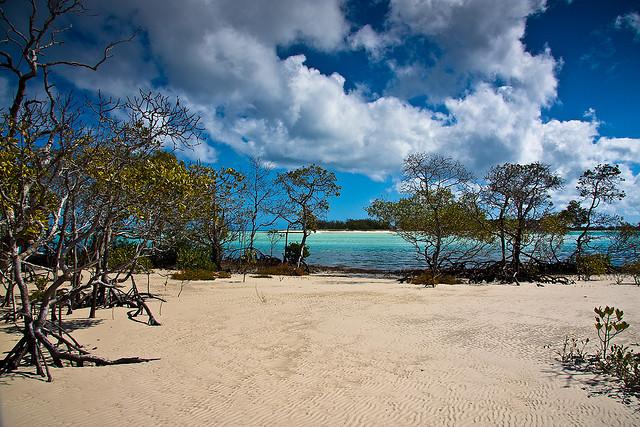 フレーザー島の画像 p1_35