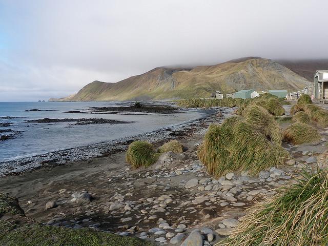 マッコーリー島の画像 p1_35