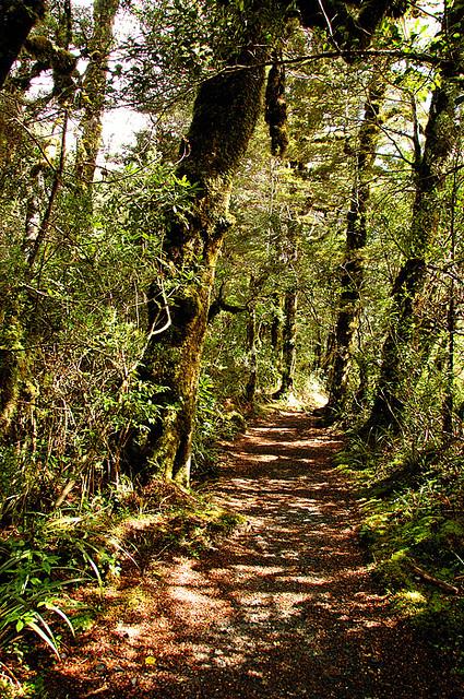 トンガリロ国立公園の画像 p1_1