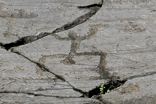 ヴァルカモニカの岩絵群の画像 p1_23