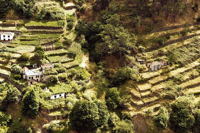 マデイラ諸島の画像 p1_7