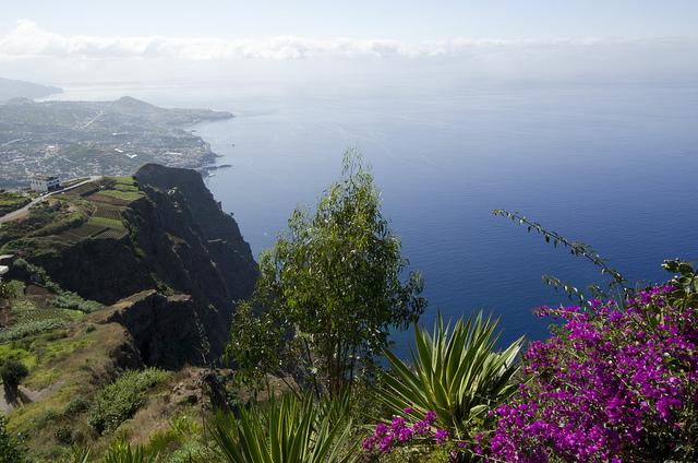 マデイラ諸島の画像 p1_25