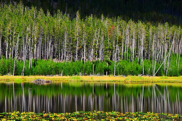イエローストーン国立公園の画像 p1_29