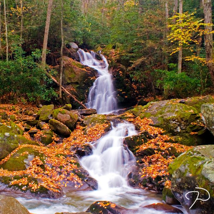 グレート・スモーキー山脈国立公園の画像 p1_30