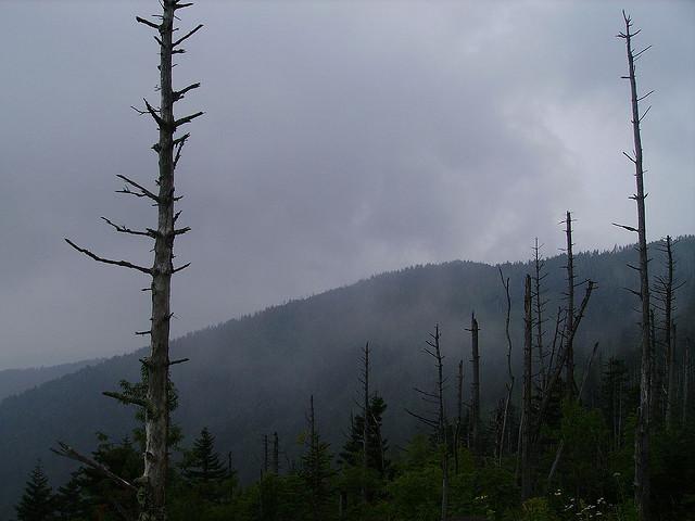 グレート・スモーキー山脈国立公園の画像 p1_10