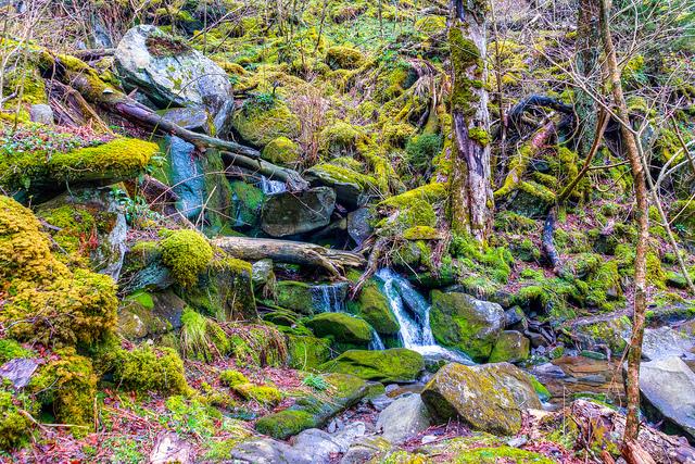 グレート・スモーキー山脈国立公園の画像 p1_4