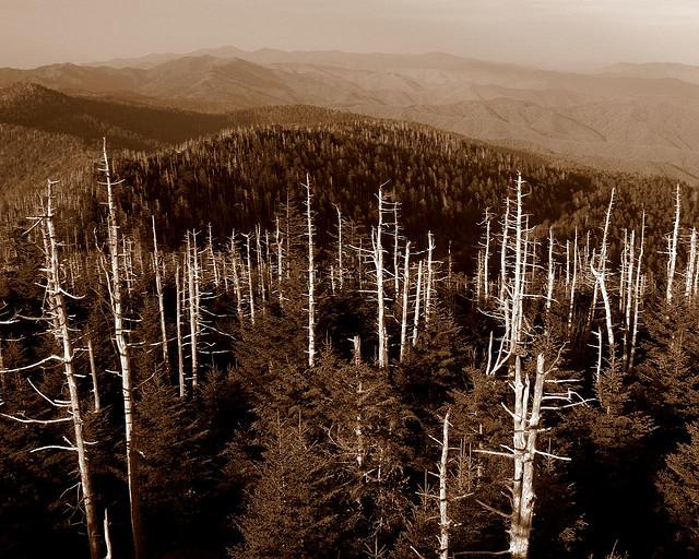 グレート・スモーキー山脈国立公園の画像 p1_23