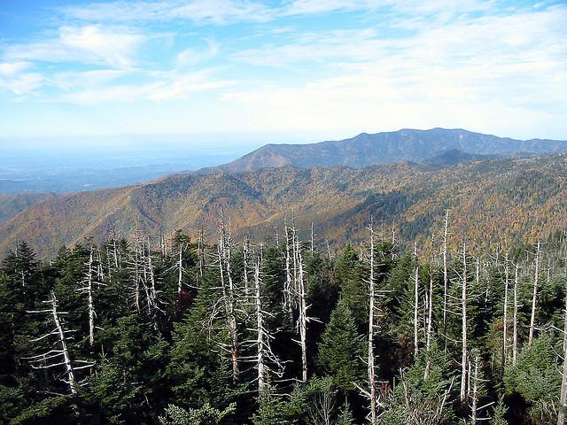グレート・スモーキー山脈国立公園の画像 p1_25