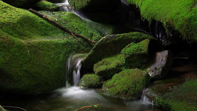 グレート・スモーキー山脈国立公園の画像 p1_7