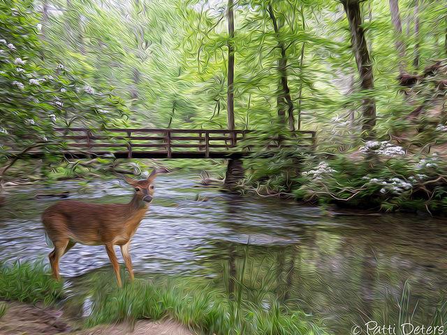 グレート・スモーキー山脈国立公園の画像 p1_29