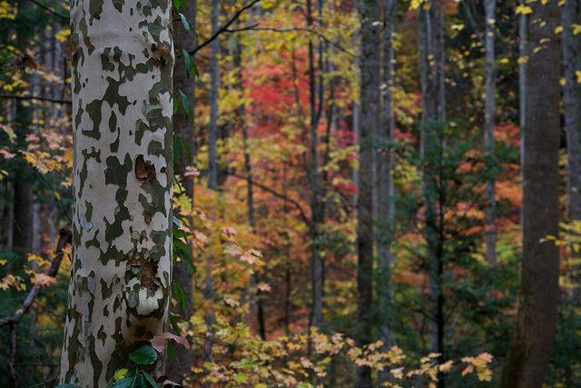 グレート・スモーキー山脈国立公園の画像 p1_11