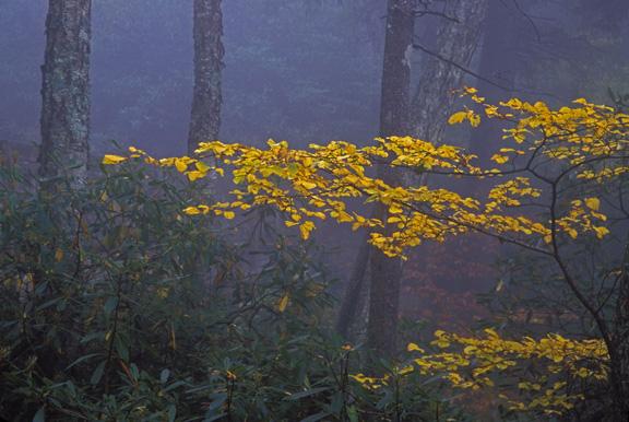 グレート・スモーキー山脈国立公園の画像 p1_24